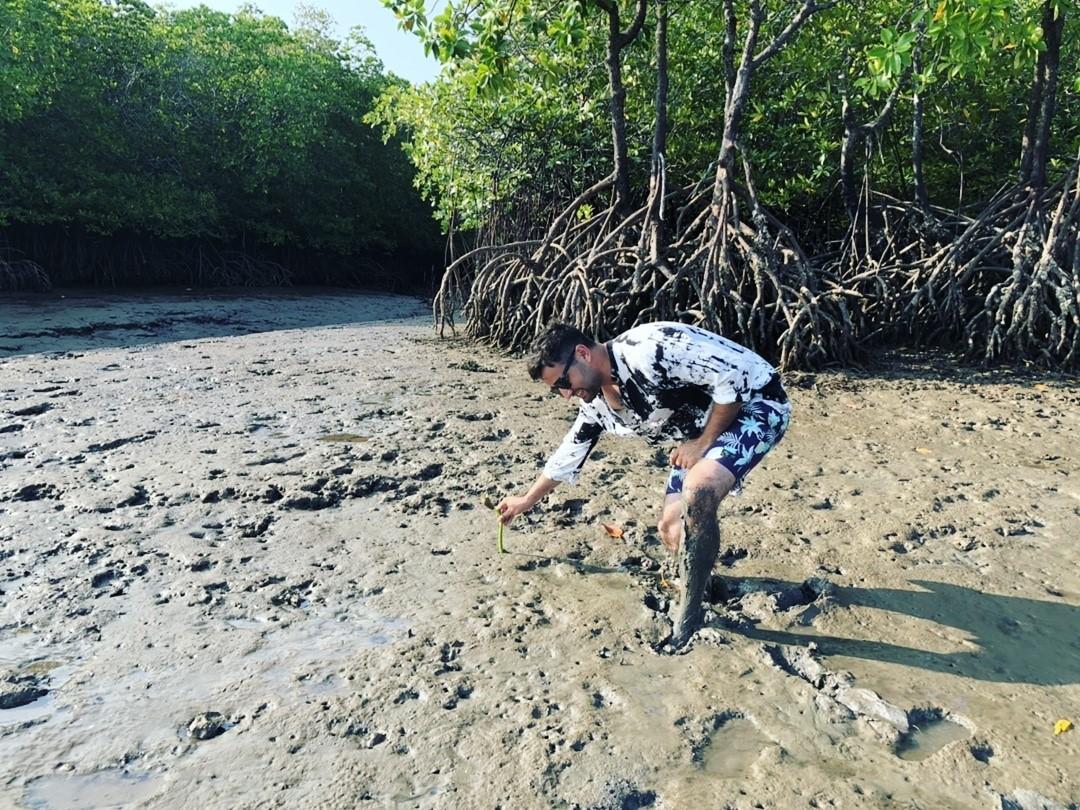 koh jum mangrove planting