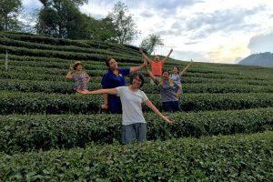 tea plantation team experience